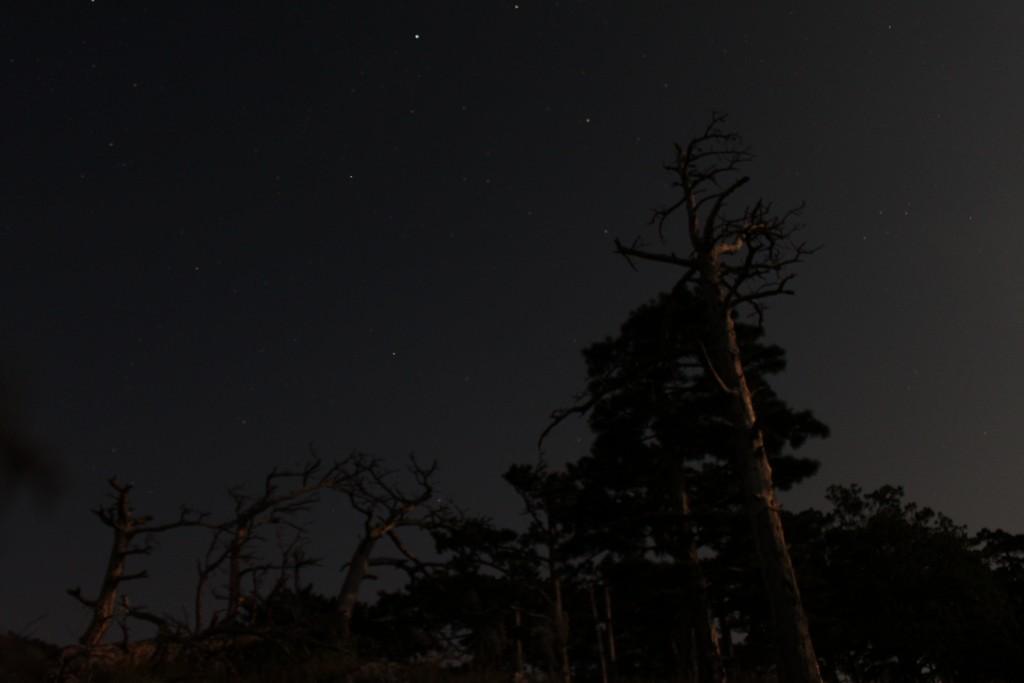 Kienberg Night